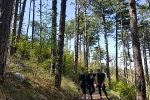 Hiking to the mountain top through forrest