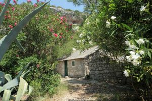 Green surroundings of Stiniva cove, house in nature